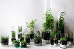 #Inspiration #Deco // On adopte les terrariums pour une déco toujours plus verte