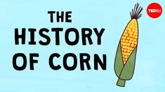 Trace the year old history of the domestication of corn, or maize, and its effects on global agriculture. -- Corn currently accounts for more than one . Social Studies Activities, Fun Activities, History Of Agriculture, Tim Armstrong, Crop Production, Printable Coupons, World History, Kids Learning, Watch