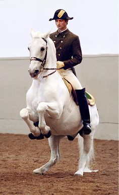 Lippizan stallion in levade at the SRS from Ballet in the Saddle - Ralph Lauren Magazine