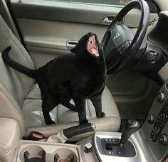 In Soviet Russia Void screams at you. - your daily dose of funny cats - cute kittens - pet memes - pets in clothes - kitty breeds - sweet animal pictures - perfect photos for cat moms Animals And Pets, Funny Animals, Cute Animals, Animals Images, Animal Pictures, Crazy Cat Lady, Crazy Cats, I Love Cats, Cool Cats