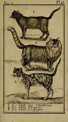 Cats from Monsieur le Comte de Buffon's Histoire Naturelle, Generale et Particuliere, 1750-1804.