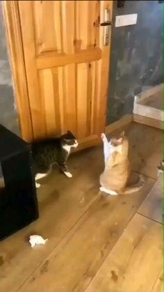 Animal Jokes, Funny Animal Videos, Funny Animal Pictures, Cute Funny Animals, Videos Funny, Cute Baby Animals, Cute Cats, Funny Cats, Wild Animals