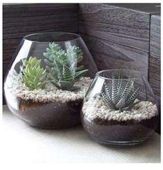 simple succulents.