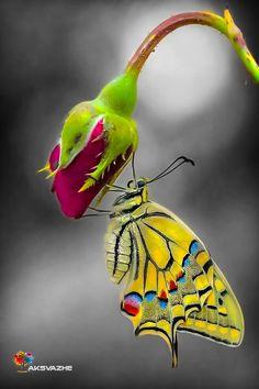 Butterfly Painting, Butterfly Wallpaper, Butterfly Flowers, Butterfly Wings, Beautiful Creatures, Animals Beautiful, Cute Animals, Beautiful Bugs, Beautiful Butterflies
