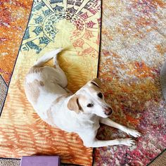 Yoga Dog My loyal yoga buddy . Yoga Dog, Dogs, Decor, Decoration, Pet Dogs, Doggies, Decorating, Deco