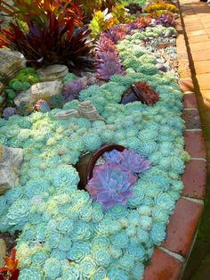 I love succulents! The texture and colors are vibrant and unique.