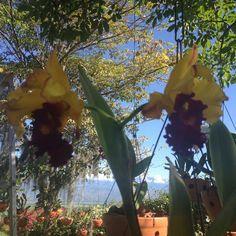 Finca Loma Buga Valle Del Cauca