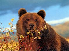 Bear - Patience and Strength. The bear totem is the power of introspection to answer all our questions.