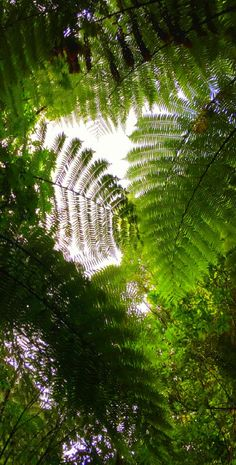 Waitomo fern forest - New Zealand Fern Forest, Woodlands Cottage, Fern Plant, Nova, Garden Of Eden, The Beautiful Country, Autumn Trees, Go Green, Amazing Nature