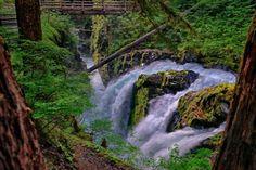 Washington cascade rivière ruisseau pont forestier