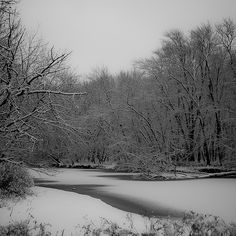 Winter Trees at Skokie Lagoon 002 - A completely still afternoon after an early Winter snow storm.
