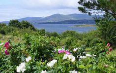 Blairscove, Co Cork Styling A Buffet, Ireland Homes, Cork Ireland, Blue Books, Grass, Vineyard, Scenery, Landscape, Plants