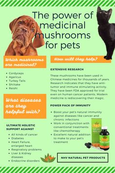 Medicinal mushrooms have demonstrated benefits for cancer & overall health in cats & dogs. Here's how to choose the best mushroom blend for your dog or cat. Herbal Remedies For Anxiety, Holistic Remedies, Homeopathic Remedies, Fruits For Dogs, Cushing Disease, Dog Diet, Diabetic Dog, Chinese Medicine, Cancer Treatment