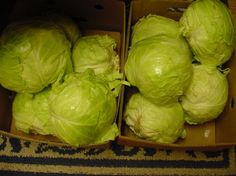 Easy Crunchy Yummy Sauerkraut from Food.com: I sent one of my pork-o-phile Zaar buddies a picture of my kraut and am posting the recipe at her request. Yes, you can make one head of cabbage at a time but I would go for about 50 pounds! It is that good. Cooking time is fermenting time. Use lint free cloths. Have fun! UPDATE: Well, this has turned out to be my most requested home-canned treat from my BFF's! I have one friend making 50 pounds of cabbage to share with another. I hope you give it…