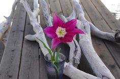 wonderful tulip at b&b harem