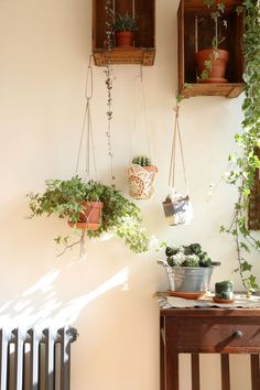 Living room hanging planters