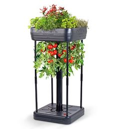 This seems so cool... upside down tomato plus a little pretty garden up top. And hopefully self-watering, too!