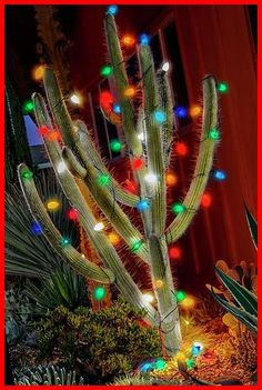 Christmas Cactus Photograph by Kelley King #Christmas #Cactus #Kelley #King #by christmas lights outdoor trees Christmas Cactus by Kelley King 12+ Christmas Lights Outdoor Trees 2020