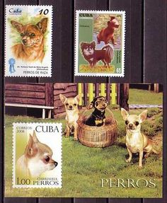 Chihuahua Dogs 3 Different MNH Stamps | eBay