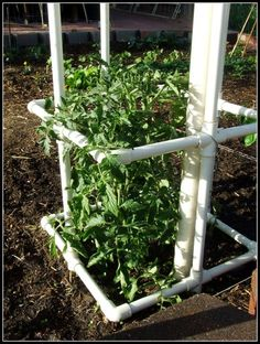 Create your own tomato cage with PVC pipe.  I have always used mesh or stakes and tied them to the almost flat to this however with a cage you have the room to let them spread out and get more airflow through them