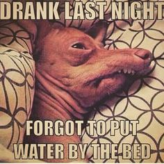 Here's some of the best drinking memes online. If you like funny drinking memes, and other funny memes, this is the site for you! Haha Funny, Funny Dogs, Funny Animals, Awkward Funny, Funny Shit, Funny Stuff, Memes Humor, Dog Memes, Funny Humor