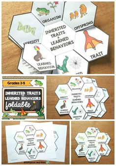 These foldables will help your students understand the difference between inherited traits and learned behaviors. Differentiated versions are included to meet the needs of all students. 6 definitions are included (organism, offspring, trait, inherited trait, learned behavior, heredity). Grades 3-5