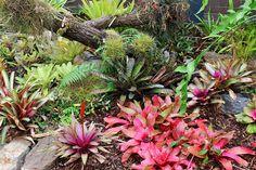 Indoor bromeliad display | by tanetahi