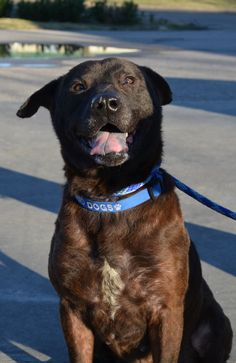 01/14/15-Meet Nolie - Like so many dogs on the East End of Houston, Nolie found himself alone on the streets trying to survive by himself. He became ...