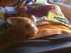 Colega Cat | Pawshake Leuven