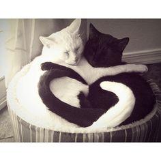 Un amour de chats ❤