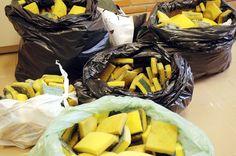 Nume arrecada 641 esponjas usadas para campanha da Univali - Univali