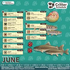 Animal Crossing Funny, Animal Crossing Guide, Purple Flowers, Summer Ideas, Hdd, Journal Ideas, January, Gaming, Animals