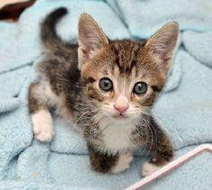 Petit chat handicapé mais plein de vie!