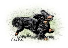Laika - LH Mini Dachshund  by Amy Reese