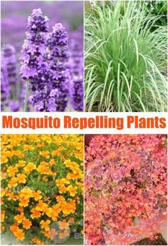 Diy Mosquito Repelling Container Garden Home Amp Family