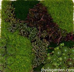 A Succulent & Moss wall hanging.