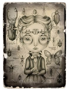 ENTOMOLOGIST Art Drawing Print 21 cm x 297 cm 8 x by oddprincess, $14.00