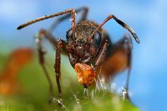 用相機找細節: Ondrej Pakan 微距鏡頭 ×水滴 搖滾昆蟲世界   DIGIPHOTO-用鏡頭享受生命