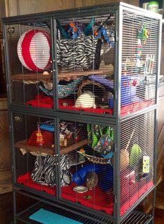 64 Best Rat Cage Ideas Images Ferret Cage Pet Rats Rat Cage