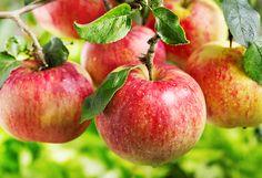 Poznaj tygodniowy program oczyszczania się z pasożytów. Słyszałaś o tygodniowej kuracji jabłkami i sokiem jabłkowym? A czarny orzech, piołun i goździki?