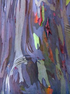 Ideas Eucalyptus Tree Bark For 2019 Patterns In Nature, Textures Patterns, Rainbow Eucalyptus Tree, Art Grunge, Art Texture, Tree Bark, Tree Tree, Art Abstrait, Natural Texture