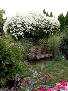 white clematis decorate a pergola and create shading