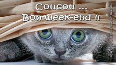 Coucou... Bon week-end !                                                                                                                                                                                 Plus