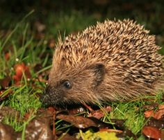 Will you be housing a hedgehog this winter?