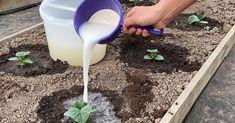 Garden Trellis, Farm Gardens, Diy Table, Trees To Plant, Aloe Vera, Preserves, Diy And Crafts, Youtube, Gardens