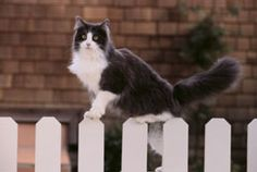 Cats coming into and damaging the yard is a common concern of most home owners. This article lists some simple yet effective ways to keep cats out of the yard.