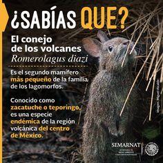 Parque Nacional El Tepozteco - México, novedades y realidades