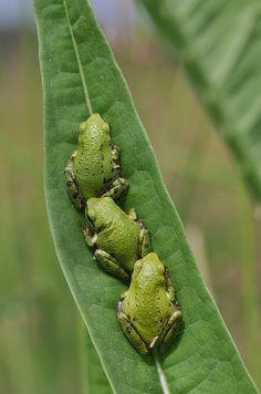 Frogs In Your Garden
