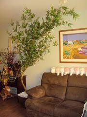 Resultado de imagem para bambu mosso na decoracao