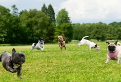 Keep your dog healthy - keep them out of dog parks..